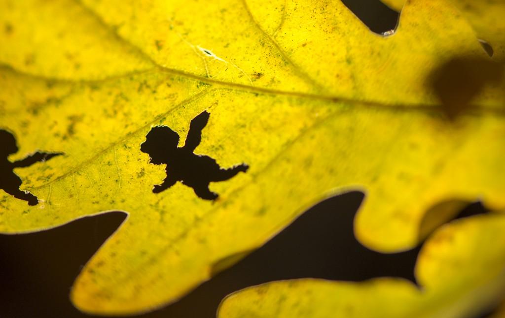 Bevis på at Märtha Louise larven finnes.