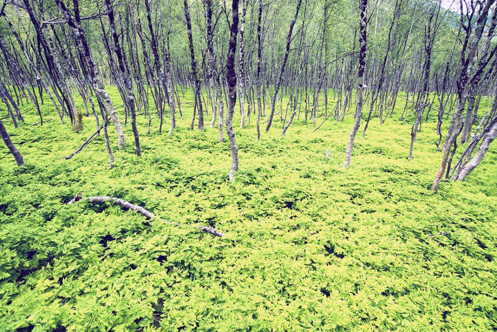 Skogen med sitt særpreg.